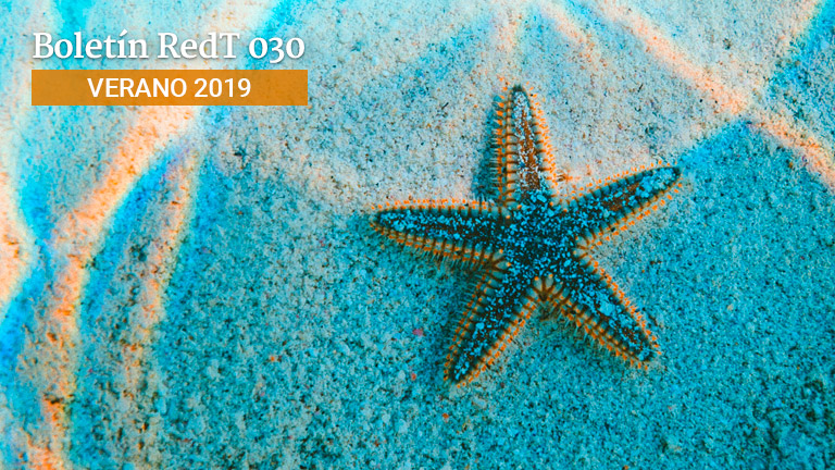 Boletín RedT Nº 30 - Verano 2019