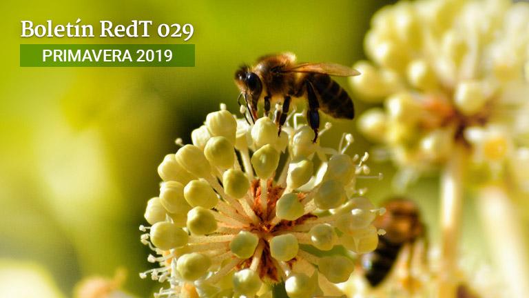 Boletín RedT Nº 27 - Primavera 2019