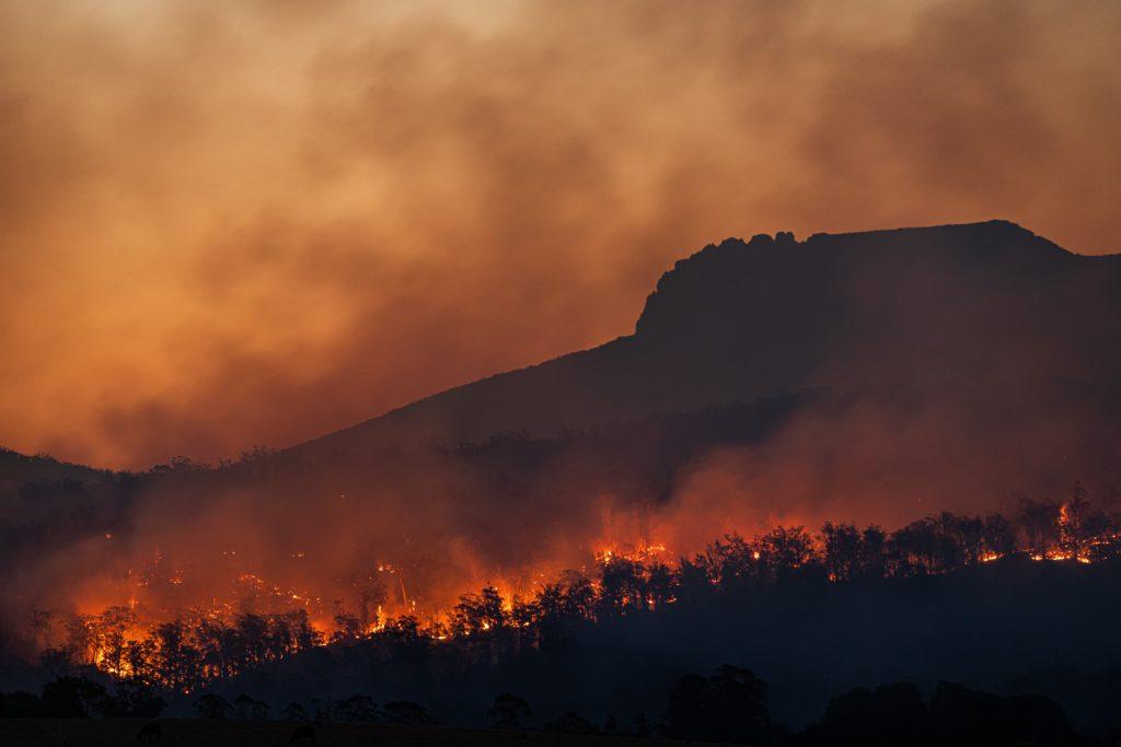 Incendios Ecocidio